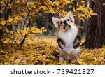 dog breed welsh corgi pembroke... | Shutterstock . vector #739421827