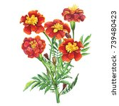 bouquet of flowers tagetes... | Shutterstock . vector #739480423