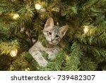 Stock photo kitten in christmas tree 739482307