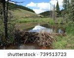 Beaver Dam And Stream In Valle...