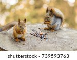 Two Squirrels Eating Nuts And...