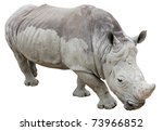 rhinoceros isolated on white... | Shutterstock . vector #73966852