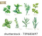 watercolor collection of... | Shutterstock . vector #739683697