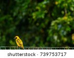 pretty small bird with black... | Shutterstock . vector #739753717