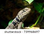 Green Small Lizard Gecko Close...