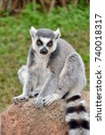 Small photo of lemurs in the foreground lemurs in the foreground, part of a series