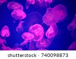 jellyfish pink swimming in a... | Shutterstock . vector #740098873