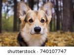 dog breed welsh corgi pembroke... | Shutterstock . vector #740107747