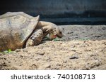 giant african spurred tortoise  ... | Shutterstock . vector #740108713