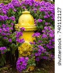 Small photo of A yellow fire hydrant in Salem Oregon, surrounded by astor flowers.
