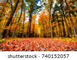 the path in the forest in the...   Shutterstock . vector #740152057