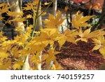 autumn foliage kyoto       Shutterstock . vector #740159257