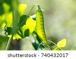 sun light comes through green... | Shutterstock . vector #740432017