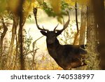 fallow deer buck closeup in the ... | Shutterstock . vector #740538997