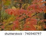 Small photo of Autumn Rowan branch
