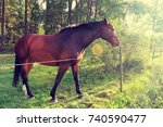 brown horse in summer landscape.... | Shutterstock . vector #740590477