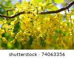 Yellow Flowers In Full Bloom
