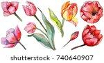 wildflower tulip flower in a... | Shutterstock . vector #740640907