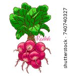 cute bunch of ripe radish. hand ... | Shutterstock .eps vector #740740327