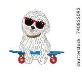 Coton De Tulear Dog Breed