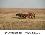 group of horses and foal... | Shutterstock . vector #740855173