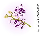 beautiful spotted orchid purple ...   Shutterstock .eps vector #740861203