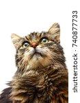 studio shot domestic tabby cat... | Shutterstock . vector #740877733