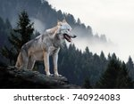Timber Wolf Hunting In Mountain