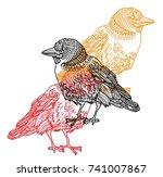 bird of the jackdaw. meditation ... | Shutterstock .eps vector #741007867