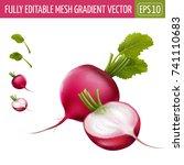 radish on white background.... | Shutterstock .eps vector #741110683