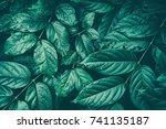foliage texture background ... | Shutterstock . vector #741135187