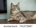 striped beautiful cat lays and... | Shutterstock . vector #741272887