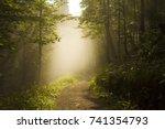 foggy sherwood. sun trough the... | Shutterstock . vector #741354793