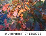 a young oak tree with beautiful ... | Shutterstock . vector #741360733