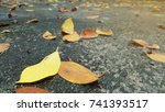 leaves fall on the street... | Shutterstock . vector #741393517