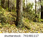 Tree Trunk And Fallen Leaves I...