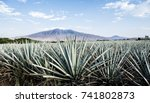 landscape of planting of agave... | Shutterstock . vector #741802873