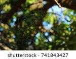 sunny web | Shutterstock . vector #741843427
