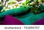 the caterpillar on the green... | Shutterstock . vector #741890707