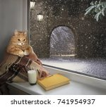 The Cat Sits On The Windowsill...