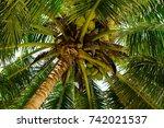 coconut tree | Shutterstock . vector #742021537