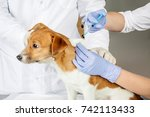 veterinarian giving an... | Shutterstock . vector #742113433