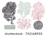 vector collection of hand drawn ... | Shutterstock .eps vector #742168933