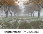 autumn background     foggy... | Shutterstock . vector #742228303
