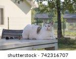 white cat | Shutterstock . vector #742316707