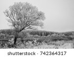 black and white photo of a tree ... | Shutterstock . vector #742364317