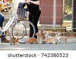 Stock photo cute wild bunny rabbits in japan s rabbit island okunoshima 742380523