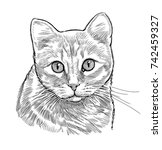 sketch portrait of a house cat | Shutterstock . vector #742459327
