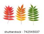 Set Of Autumn Colored Leaves O...