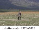 cape mountain zebra  equus... | Shutterstock . vector #742561897